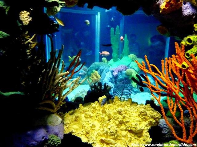 acuario-de-lisboa